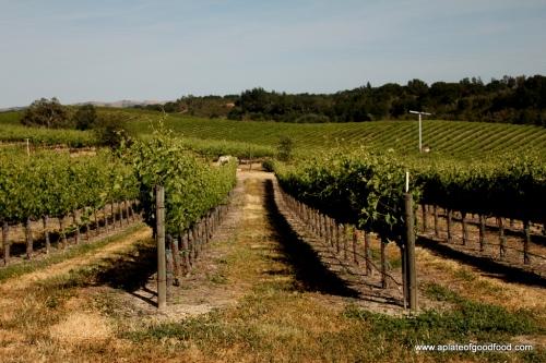 vineyard in paso